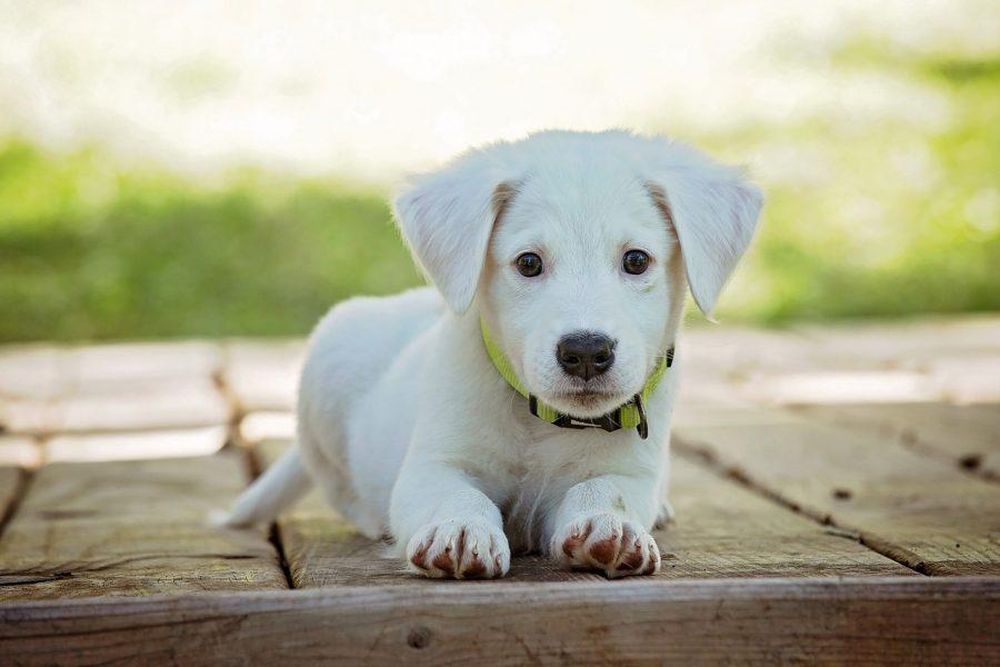 puppy op hondenschool