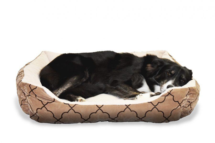 hond in hondenbed