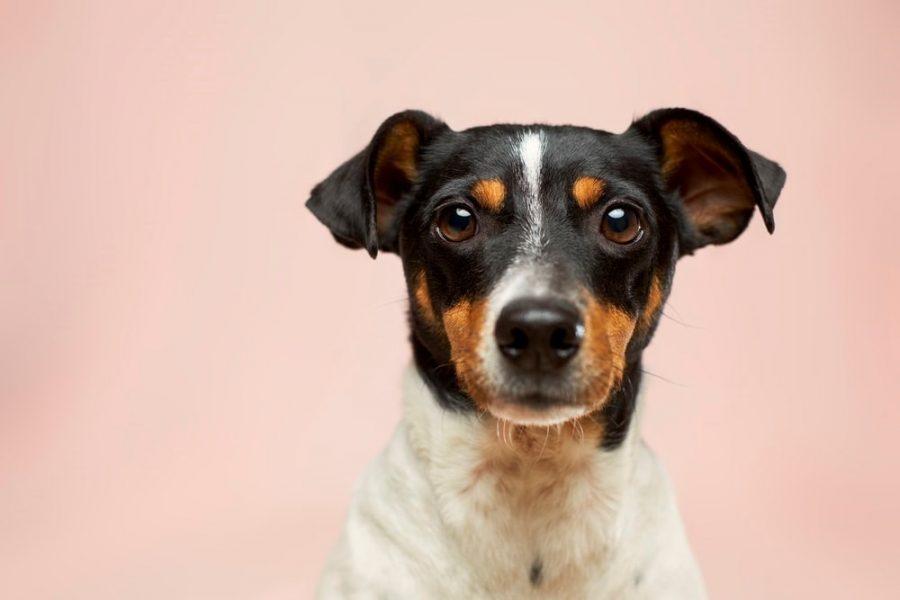 een hondenverzekering waarom is het handig